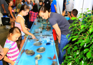 Touch Tanks at Fred Hall Shows